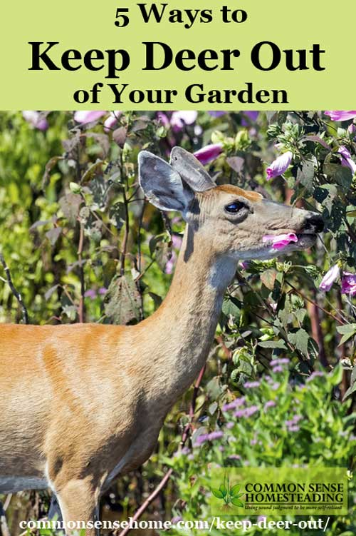 Keep deer out of your garden 5 deer deterrent strategies - How to keep deer out of garden home remedies ...