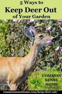 deer in garden