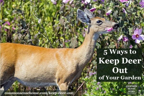Keep Deer Out of Your Garden 5 Deer Deterrent Tips and Tricks