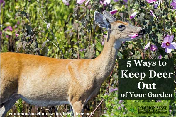 Keep Deer Out Of Your Garden Or Yard And Protect Your Harvest With Deer  Deterrent Options