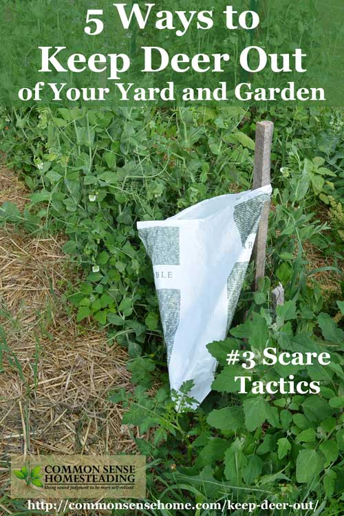 how to keep deer out of your garden. Keep Deer Out Of Your Garden Or Yard And Protect Harvest With Deterrent Options How To P