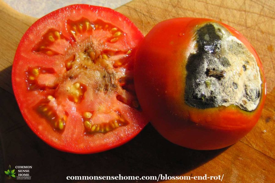 tomato sliced in half to show rot inside the fruit