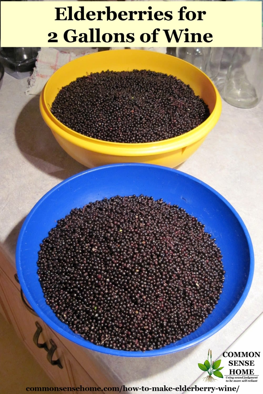 elderberries for wine