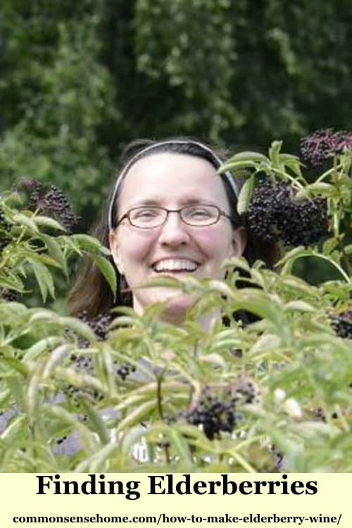 finding elderberries