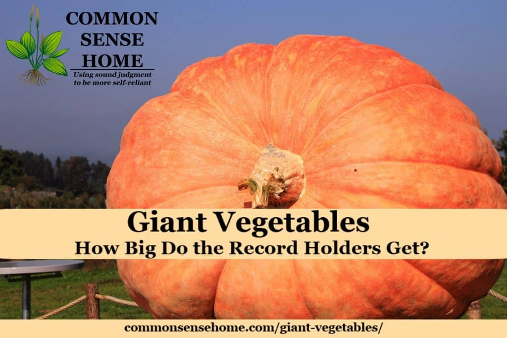 Tips for growing giant vegetables, plus a listing of 10 current world record holding vegetables. You won't believe how big these veggies can get!