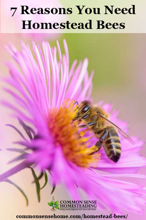 From increased garden and orchard productivity to a bounty of honey for food and medicine, homestead bees are a great addition to your self-reliance preps.