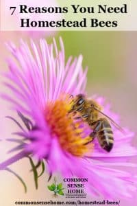 From increased garden and orchard productivity to a bounty of honey for food and medicine, homestead bees are a great addition to your self-reliance repertoire.
