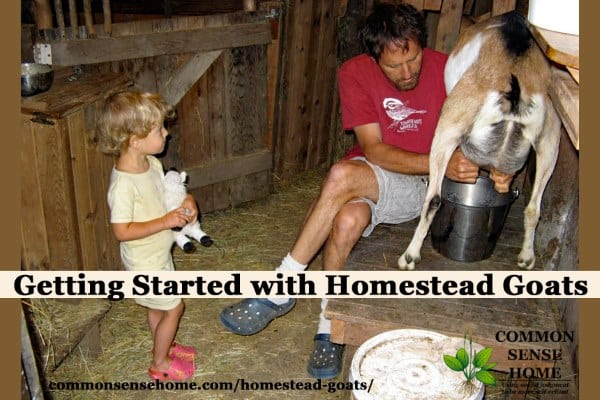 Homestead Goats - What You Need to Know to Get Started