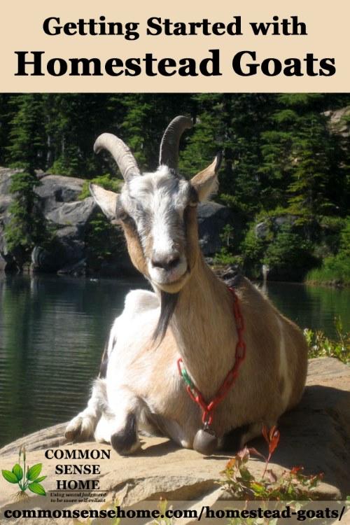 Nimbrethil the goat resting