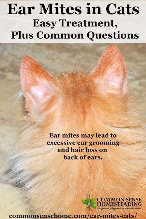 Ear Mites Hair Loss Cats