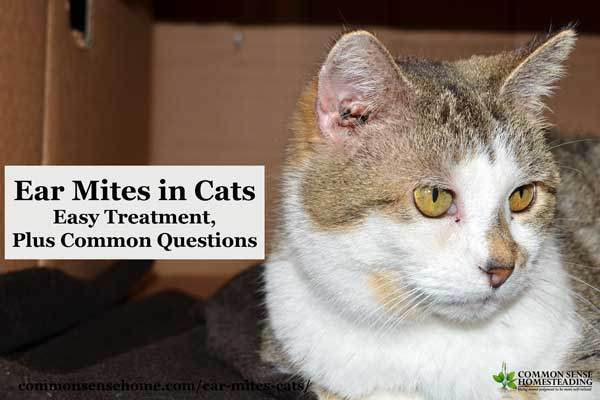 Ear Mites in Cats – Easy Treatment, Plus Common Questions ... Ear Mites In Cats