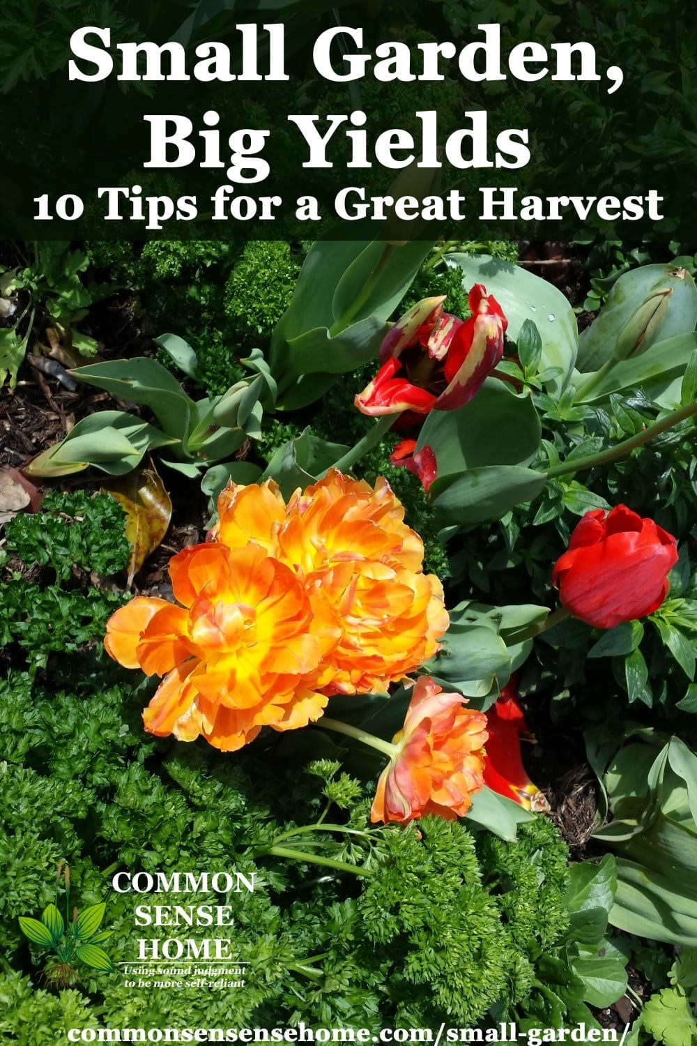 "small garden featuring herbs mixed with flowers, with overly lay text ""small garden, big yields - 10 tips for a great harvest"""