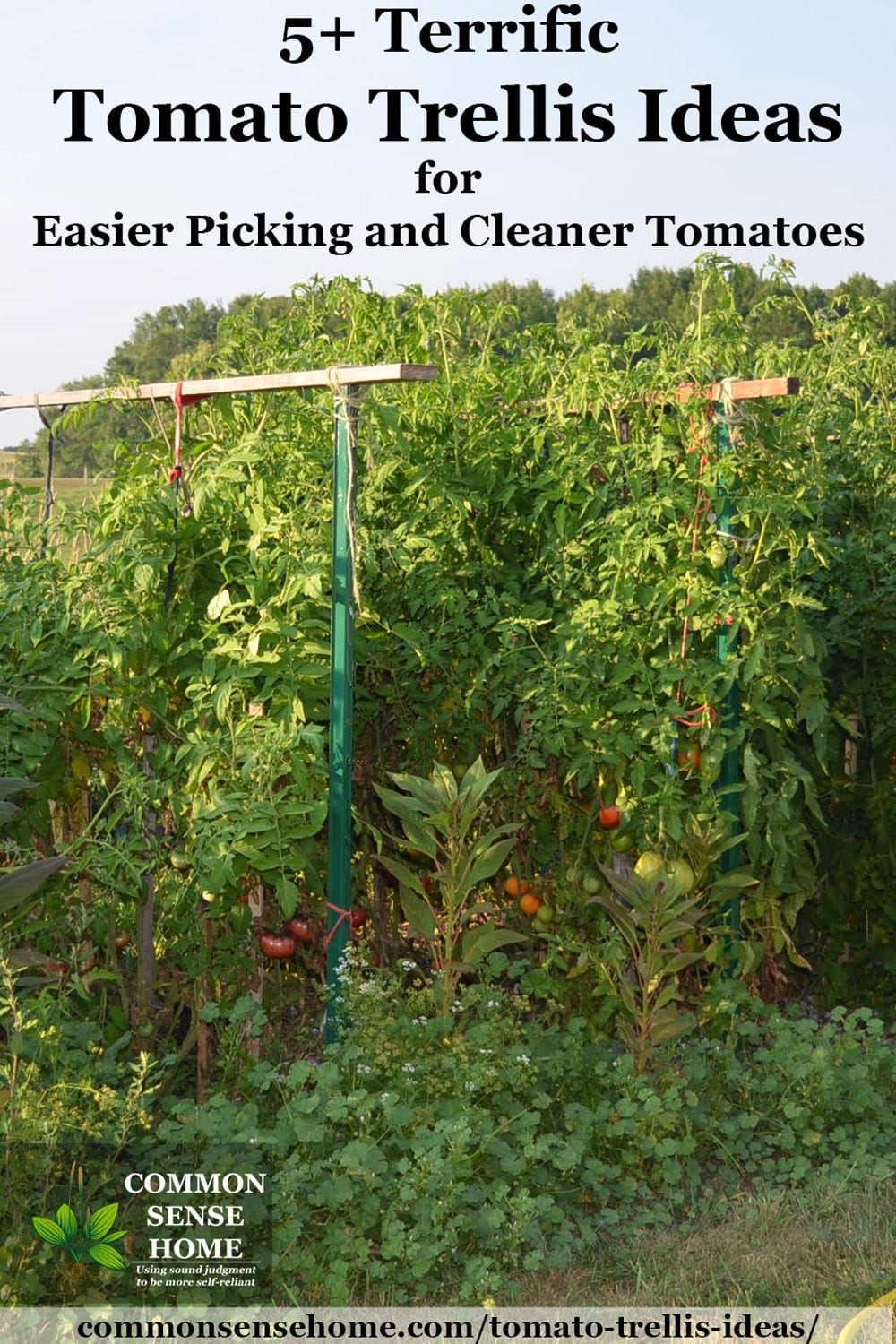 tomato trellis made with steel tomato stakes and wooden stakes. loaded with tomato plants