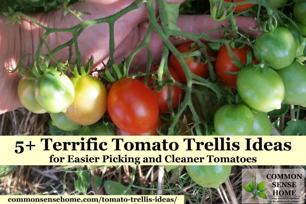 "handful of tomatoes on vine with text overlay ""Terrific Tomato Trellis Ideas"
