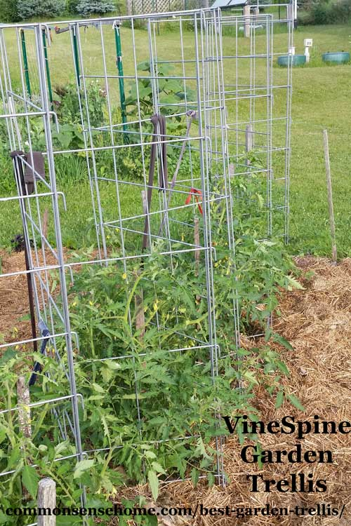 Pea Trellis Ideas Part - 48: Check Out These Homemade Tomato Trellis Ideas That Are Wind Resistant,  Tall, Short,