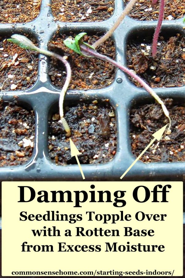 Starting Seeds Indoors - Step by Step Guide with