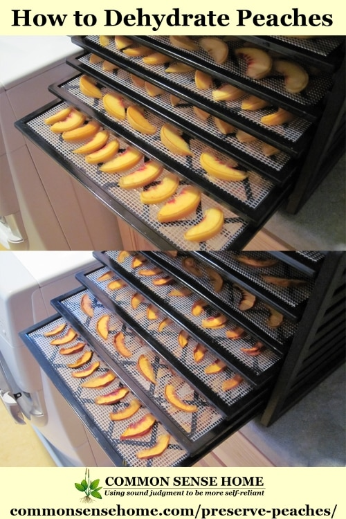 Peaches loaded in a dehydrator