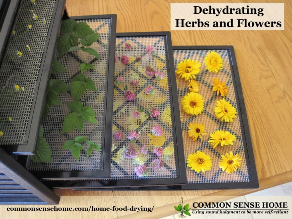 Dehydrator with its trays out and loaded with herbs.