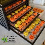 Dehydrator loaded with tomatoes
