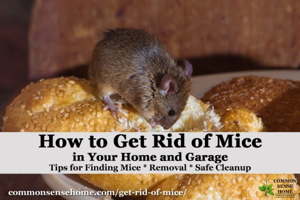 The Best Ways Get Rid of Mice In Your House and Garage