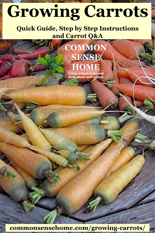 "Light and dark orange harvested carrots sitting on wooden table, plus text overlay ""growing carrots"""
