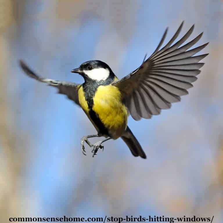 Stop Birds Hitting Windows – 5 Tips to Protect Our Feathered Friends