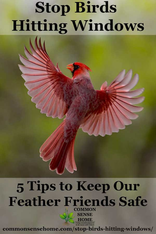 Stop Birds Hitting Windows - 5 Tips to Protect Our Feathered