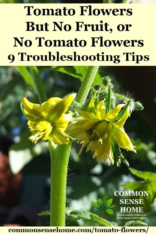 Tomato Flowers But No Fruit, or No Tomato Flowers - 9