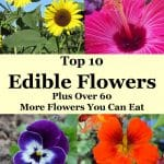 Collage of edible flowers