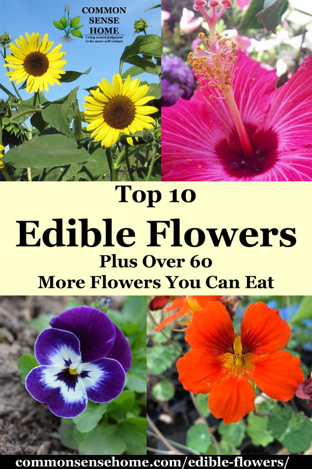 edible flowers list and pictures - sunflowers (top left), hibiscus (top right), pansy (bottom left), nasturtium (bottom right)
