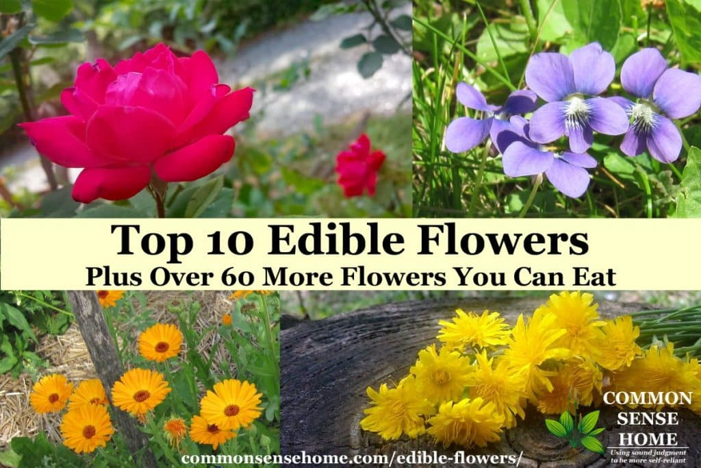 edible flowers list and pictures - roses (top left), violets (top right), calendula (bottom left), dandelions (bottom right)