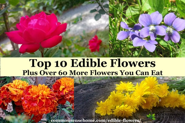 Edible flowers such as roses can be used fresh or dried. Whether you're nibbling edible petals or cooking up buds, flowers you can eat add fun to any table.