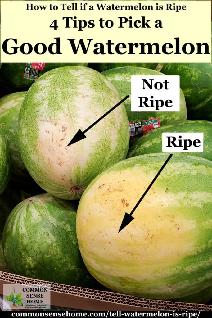 comparison of field spot on unripe and ripe watermelon
