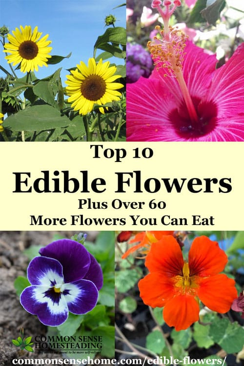 can you use fresh flowers on a wedding cake top 10 edible flowers plus 60 more flowers you can eat 12380