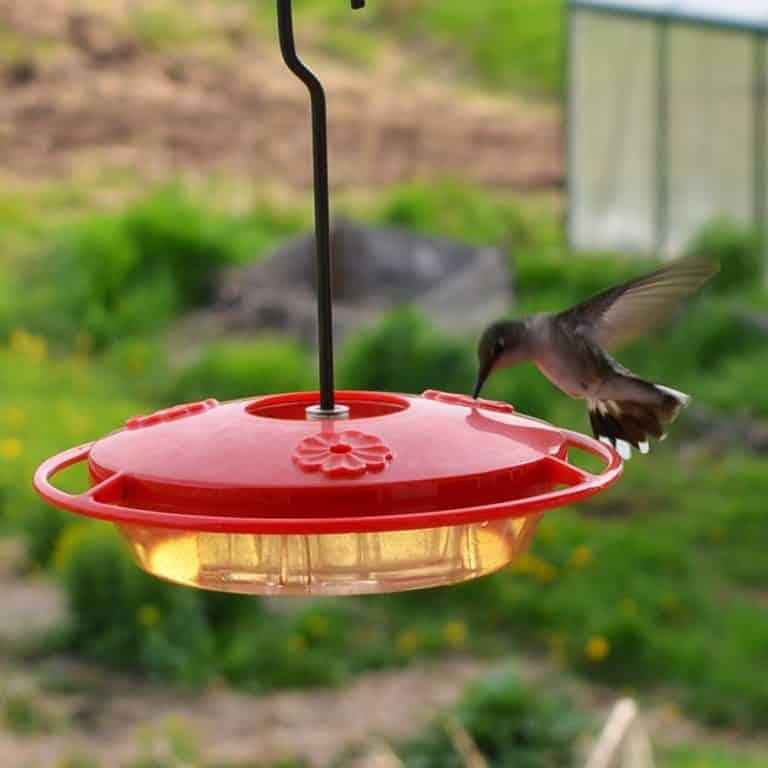 Homemade Hummingbird Food Recipe and the Best Feeder