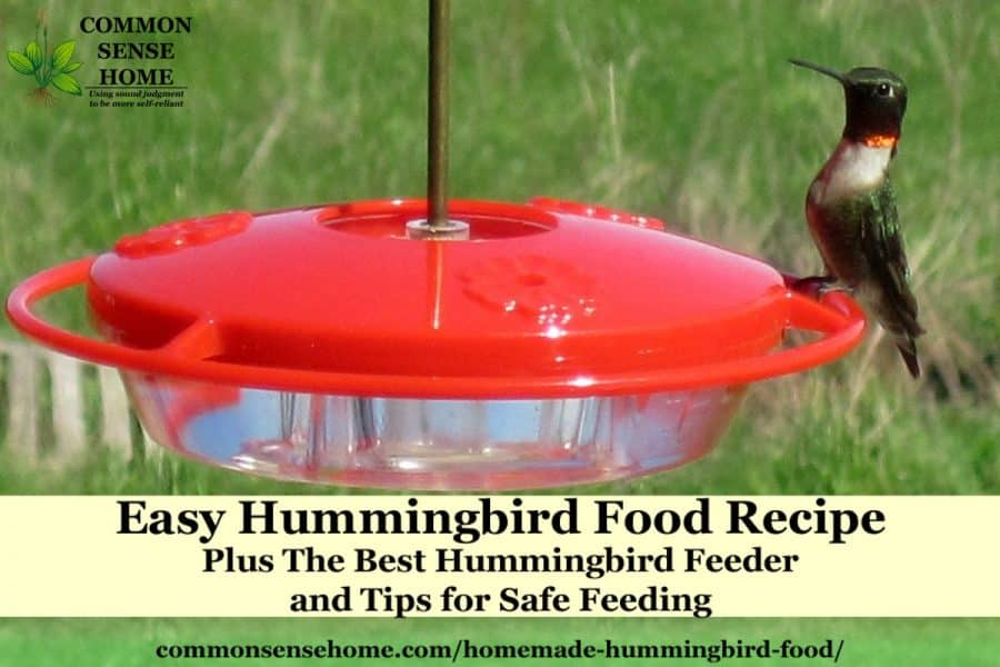 Homemade Hummingbird Food Recipe and
