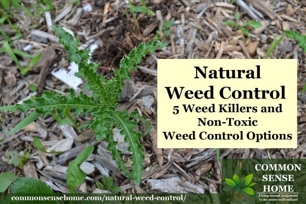 Natural Weed Control - Weed Killers and Non-Toxic Weed