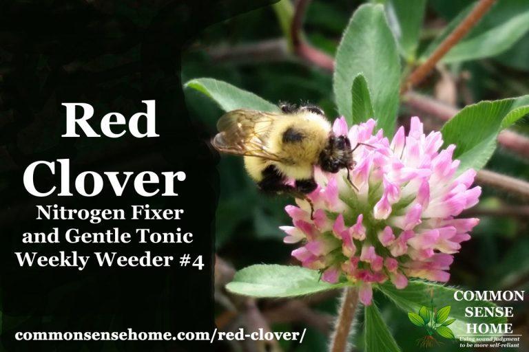 Red Clover – Nitrogen Fixer and Gentle Tonic – Weekly Weeder #4