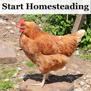 Start Homesteading