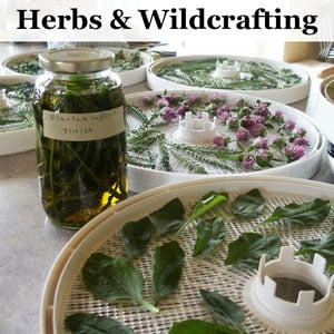 Herbs and Wildcrafting - Weekly Weeder