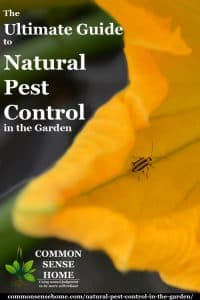 The Ultimate Guide to Natural Pest Control in the Garden
