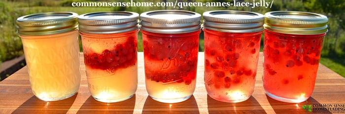 Queen Anne's Lace Jelly with Currants - The bright acidity of currants is a perfect compliment to the delicate floral flavor of Queen Anne's lace jelly.