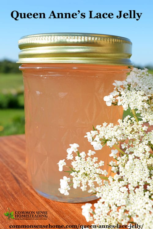 Queen Anne's lace jelly is delicate and floral with a hint of peach flavor.