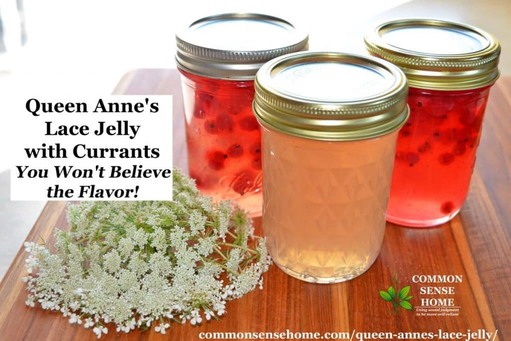 queen anne's lace jelly currants wide18