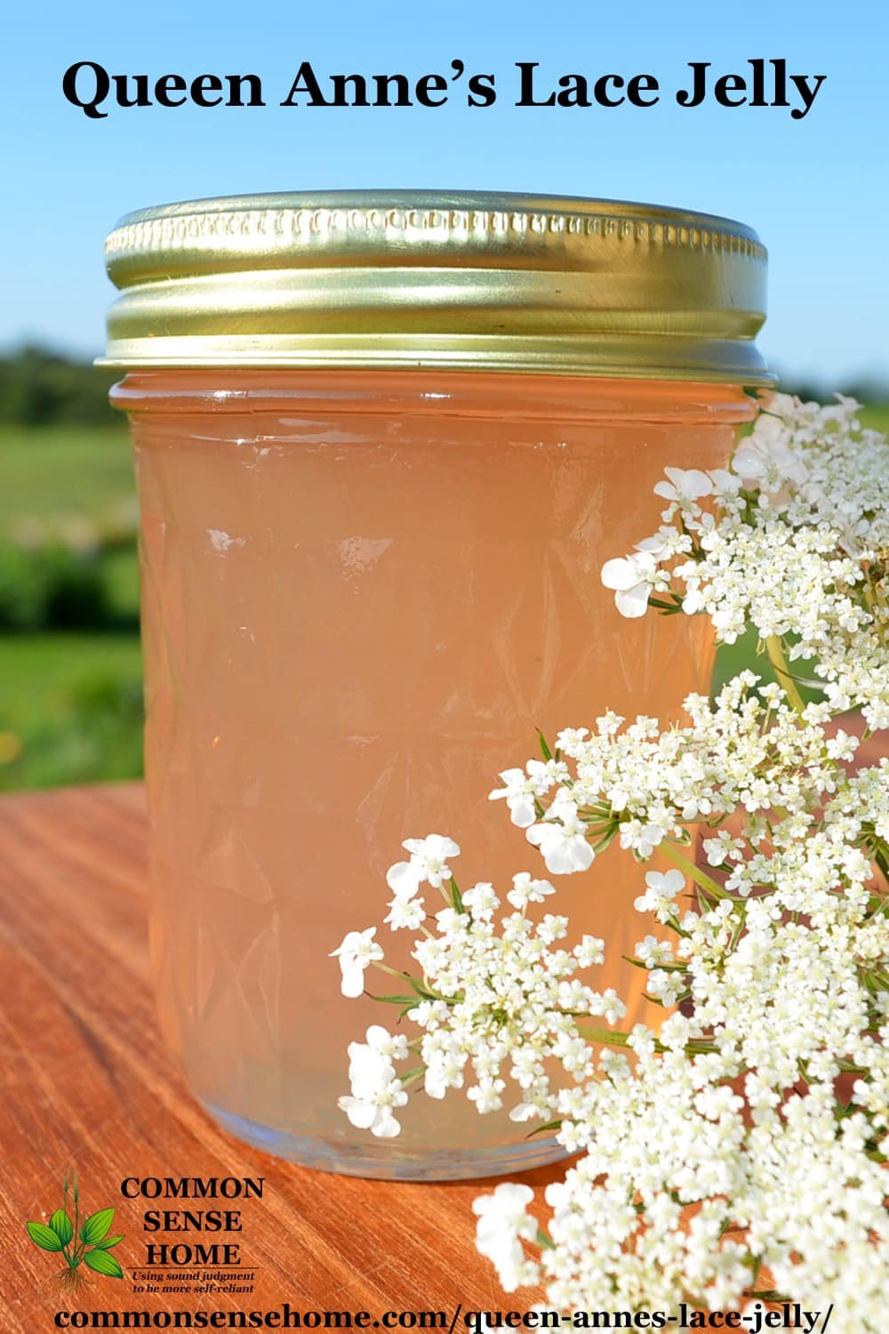 queen anne's lace jelly with blossoms