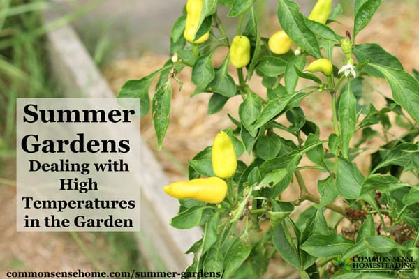Summer Gardens - Make the most of your summer vegetable garden by working with your heat zone, watering, mulching and smart gardening techniques.