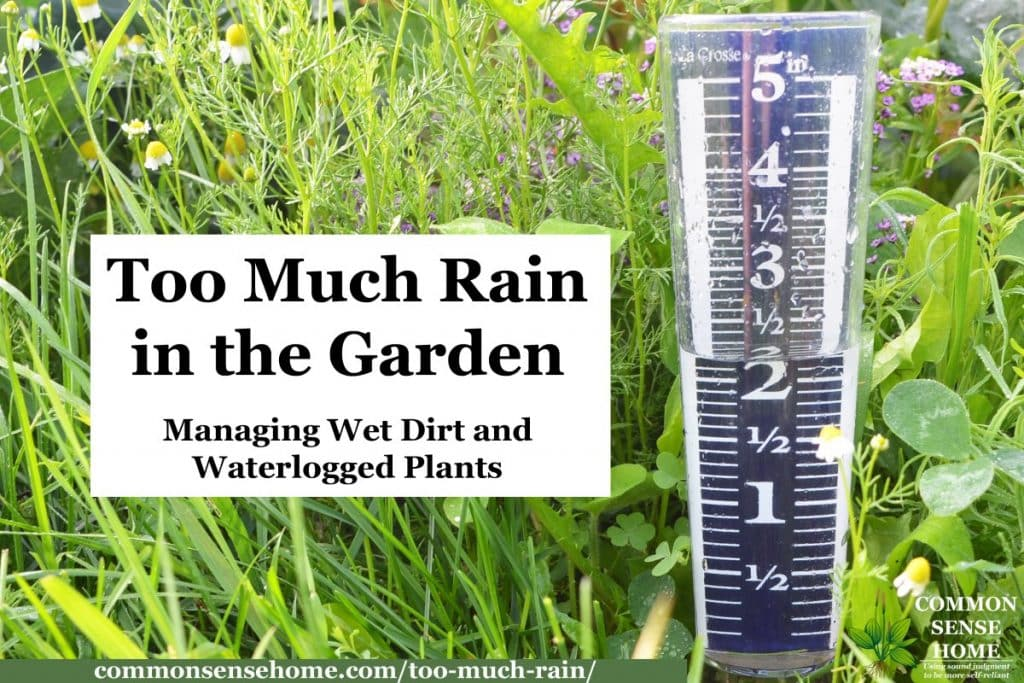too much rain in garden