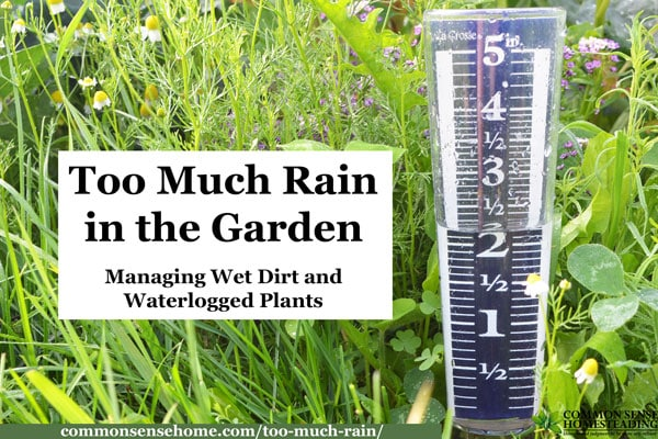 Tips for Dealing with Too Much Rain in the Garden - Raised Beds, Improving Drainage, Damage Control for Wet Soil and Waterlogged Plants