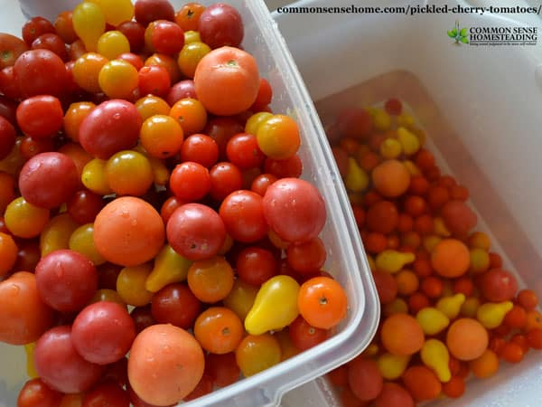 This easy recipe for pickled cherry tomatoes combines tomatoes with other garden veggies for long term storage. Includes more ways to use cherry tomatoes.