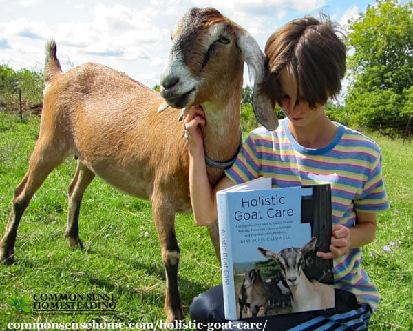 Holistic Goat Care gives the beginner building blocks for success while providing a more complex understanding of goat care for veteran goatherds.